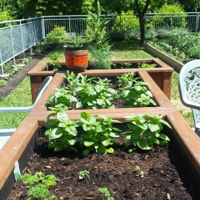 A thriving urban vegetable garden at Maison Jesus-Marie